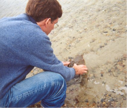 Chris and the horseshoe crab